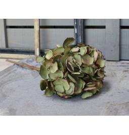 Flower hydrangea sage green...